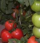 Προιοντα βιολογικής καλλιέργειας