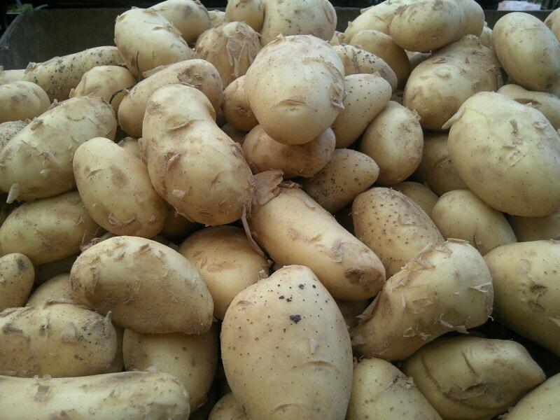 greek_potatoes_spunta