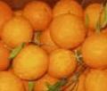 Το πορτοκάλι  από ελληνικό παραγωγό