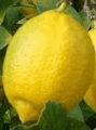 Λεμόνι από ελληνικό παραγωγό άριστης ποιότητας