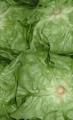 Σαλάτες άριστης ποιότητας