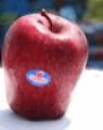 Γλυκειά ελληνικά μήλα Starking delicious