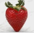 Φράουλα πηλίου υπέροχης ποιότητας