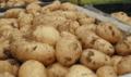Πατατές υψηλής ποιότητας χωρίς φυτοφαρμάκων