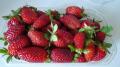Φράουλες οικολογικες