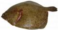 Ψαρι καλκάνι από ελληνικό παραγωγό
