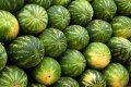 Καρπούζια- Watermelons