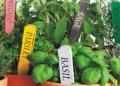 Σπόροι λιπάσματα μοσχεύματα φυτών