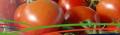 Παραγωγή των ντομάτων υψηλής ποιότητας