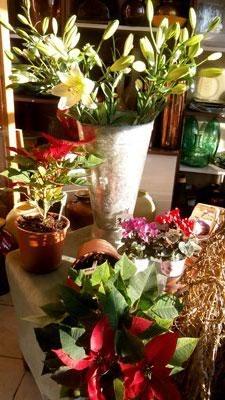 Παραγγελία Λουλούδια