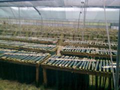 Οργάνωση και δημιουργία νέων μονάδων εκτροφής σαλιγκαριών
